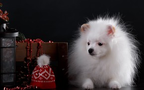 Picture the dark background, dog, puppy, cap, decor