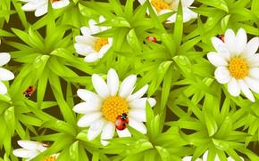 Picture droplets, Rosa, ladybug, chamomile