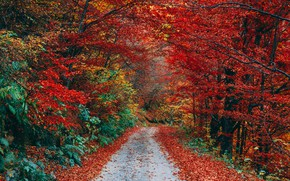 Picture track, autumn Park, listpad