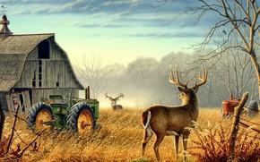 Wallpaper Nature, trees, animals, birds, fog, mood, deer, barn, farm, mist, fences