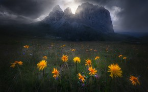 Picture the sky, flowers, mountains, clouds, nature