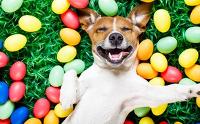 Wallpaper grass, colorful, Easter, Easter, funny, happy, dog, the painted eggs, spring, holiday, eggs, dog