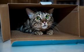 Picture cat, cat, box, Kota
