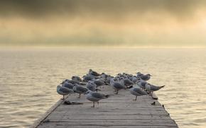 Picture birds, bridge, fog