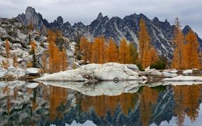 Picture trees, landscape, lake, rocks, USA, Washington