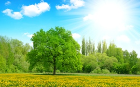 Wallpaper clouds, the sky, the sun, summer, yellow, dandelions, greens, glade, trees, rays, flowers