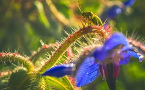 Picture flower, nature, plant, insect