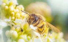 Wallpaper summer, macro, flowers, bee, spring