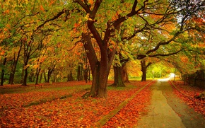 Picture Autumn, Trees, Park, Fall, Foliage, Track, Park, Autumn, Colors, Trees, Falling leaves, Leaves, Path