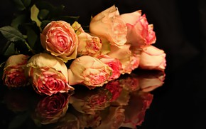 Picture flowers, the dark background, pink, Roses, buds