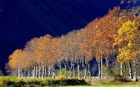 Picture autumn, trees, landscape, France, Provence-Alpes-Cote d'azur, Maassen