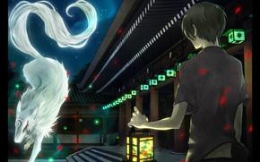 Picture night, meeting, boy, lights, Natsume Yuujinchou, Madara, white wolf, Natsume Takashi, Book of friendship Natsume