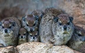Picture Kenya, mammal, Daman Bruce, Mara North Conservancy