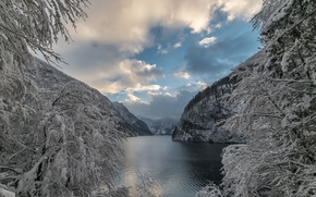 Picture winter, snow, trees, mountains, branches, lake, Germany, Bayern, Alps, Germany, Bavaria, Alps, Königssee lake, lake …