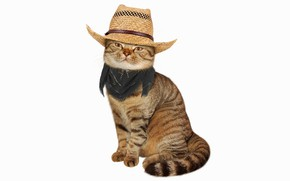 Picture cat, hat, white background, shawl