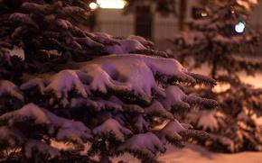 Picture winter, snow, tree, new year, spruce, bokeh, kportfolio, insta:kportfolio
