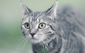 Picture eyes, background, cat