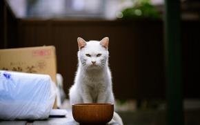 Picture cat, look, bowl, aggressive