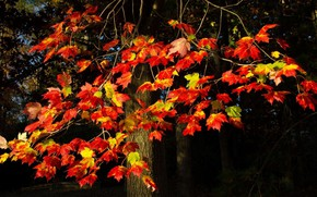 Picture autumn, leaves, red