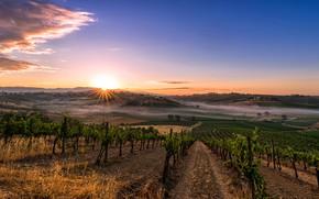 Wallpaper field, plantation, rays, morning, Italy, fog, home, trees, dawn, Tuscany, hills, the sun, the sky, ...