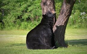 Wallpaper tree, animal, bear, stay, nature, bear