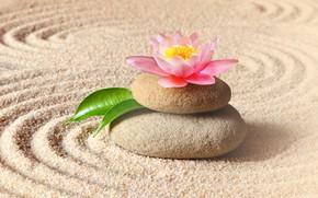 Picture sand, flower, stones, Lotus, flower, pink, sand, Spa, stones, spa, zen