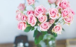 Wallpaper roses, bouquet, gentle, pink