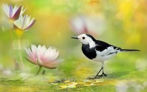 Picture bird, spot, Nymphaeum