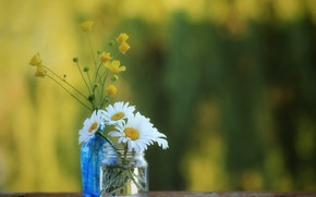 Picture chamomile, Bank, bokeh, buttercups, bottle