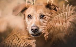 Wallpaper dog, fern, each