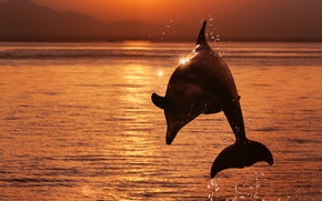 Picture sea, the sky, water, the sun, squirt, Dolphin, glare, jump, shore, glow