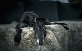 Wallpaper house, comfort, dog