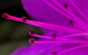 Picture flower, nature, petals, stamens