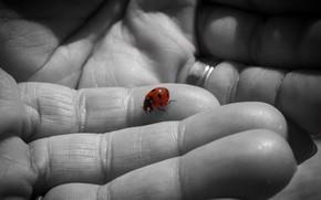 Picture background, ladybug, hands