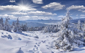 Picture winter, forest, the sky, the sun, clouds, rays, snow, mountains, branches, traces, hills, trail, ate, ...