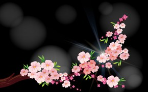 Picture Flowers, Rendering, The Dark Background