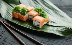 Picture algae, fish, Rolls