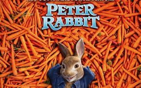 Picture rabbit, carrots, Peter Rabbit