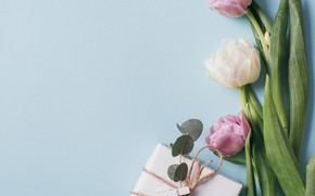 Picture flowers, background, spring, Tulips, Gift