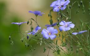 Picture macro, flowers, Len