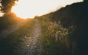 Picture road, summer, light, flowers, nature