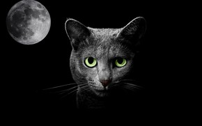 Picture cat, night, fantasy, the moon