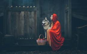 Wallpaper apples, basket, girl, mood, hood, Grant Lampard, cloak, dog