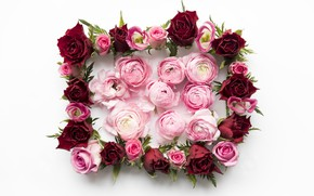 Picture flowers, roses, red, pink, pink, flowers, peonies, roses, peonies, frame, floral