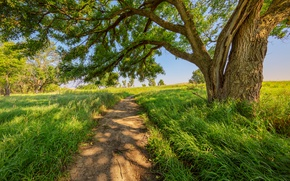 Picture road, summer, tree