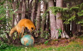 Picture summer, mozilla firefox, Fox