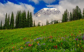 Picture clouds, trees, flowers, mountains, meadow, USA, Washington