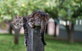 Picture cat, stump, blur, striped