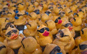 Picture background, toys, duck