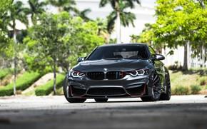 Picture BMW, Predator, Sight, Graphite, F83